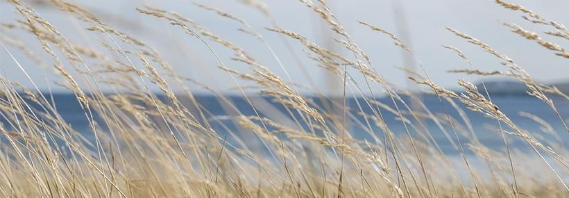 Sustainability I BNP Paribas Wealth Management
