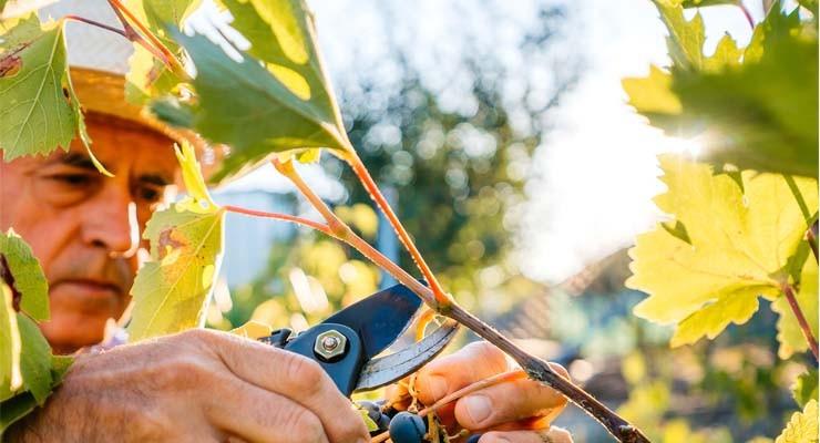 Agrifrance : étude annuelle foncier rural Grande-Bretagne I BNP Paribas Wealth Management