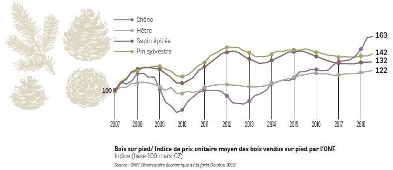 Bois sur pied I Agrifrance I BNP Paribas Wealth Management